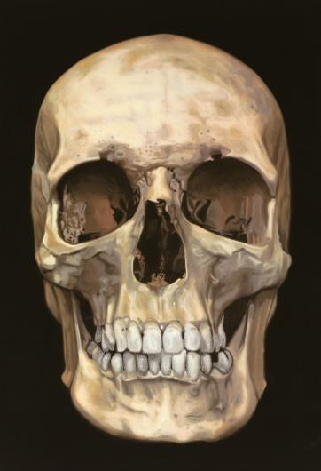 Damien Hirst:The Skull Beneath the Skin