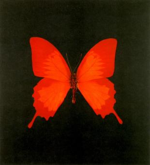 Damien Hirst:The Souls on Jacob's Ladder Take Their Flight (Large Red)