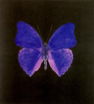 Damien Hirst:The Souls on Jacob's Ladder Take Their Flight (Large Blue)