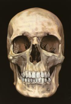 Damien Hirst:The Skull Beneath the Skin