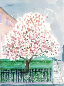 David Hockney:Magnolia Edwards Square