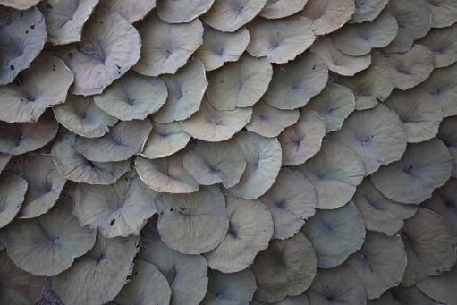 David Roux-Fouillet:Lotus LeAF Installation